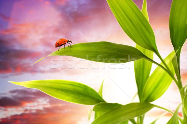 Joaninha sessão grama verde céu jardim fundo Foto stock © Nejron