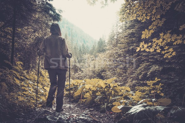 Woman with hiking equipment walking in mountain forest Stock photo © Nejron
