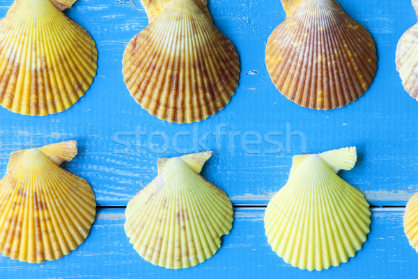Close Up Of Seashells As Texture On Blue Wooden Background Stock photo © Nelosa
