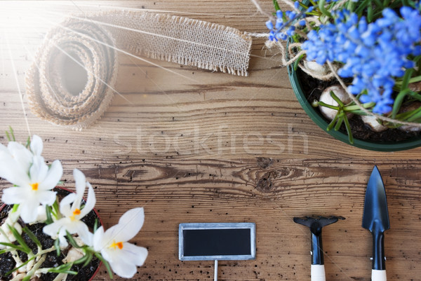 Sunny Flowers, Sign, Copy Space For Advertisement Stock photo © Nelosa