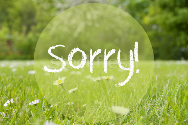 Stock photo: Gras Meadow, Daisy Flowers, Text Sorry