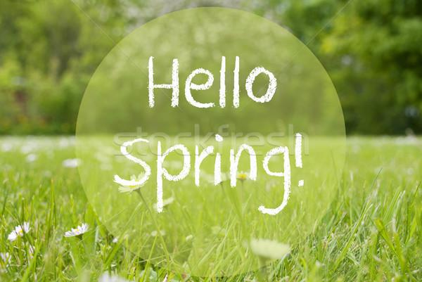 луговой Daisy цветы текста привет весны Сток-фото © Nelosa