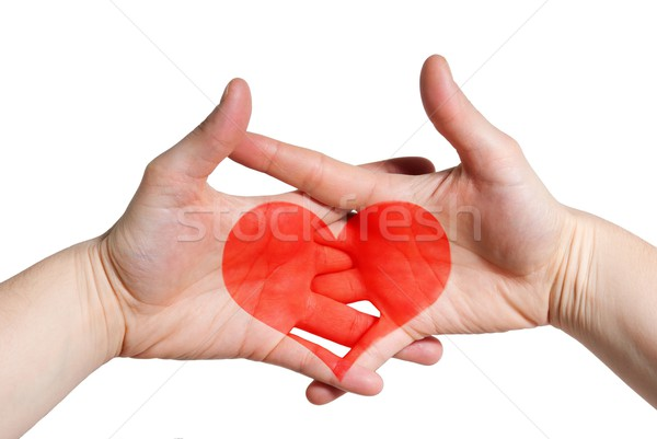 two hands with a heart Stock photo © Nelosa