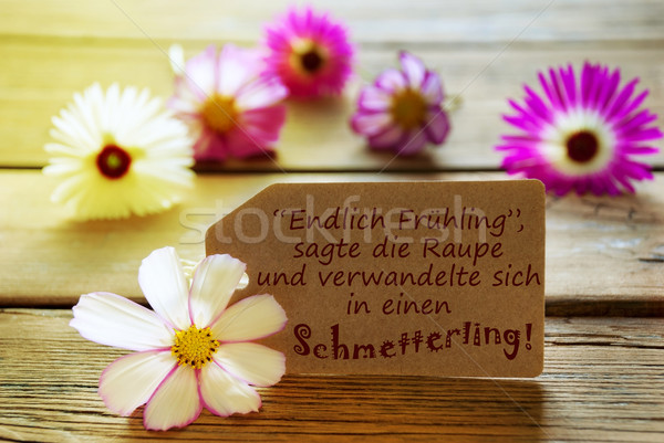 Sunny Label With German Life Quote With Cosmea Blossoms Stock photo © Nelosa
