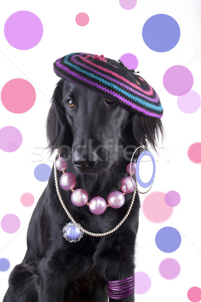 Female Dog with Jewels Stock photo © Nelosa