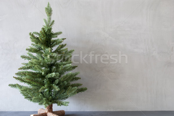Christmas tree with cement wall as background copy space