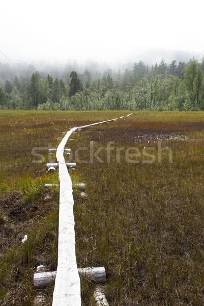 Walkingpath in the Moor Stock photo © Nelosa