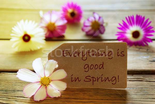 Sunny Label Life Quote Everything Is Good In Spring With Cosmea Blossoms Stock photo © Nelosa