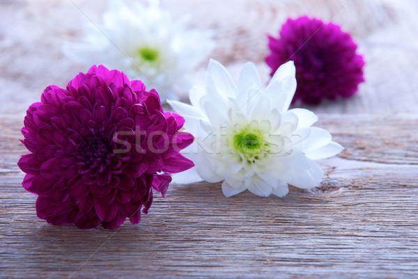 Foto d'archivio: Viola · fiori · bianchi · legno · copia · spazio · primavera