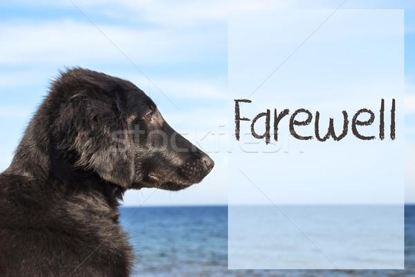 Köpek okyanus metin veda İngilizce av köpeği Stok fotoğraf © Nelosa