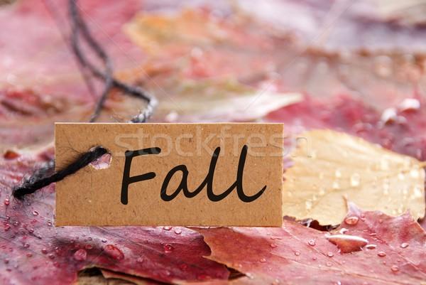 Stok fotoğraf: Etiket · düşmek · kahverengi · yazılı · sonbahar · yaprakları · doğa