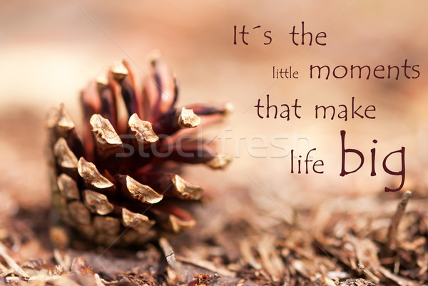 Fir Cone with Saying Its the little Moments that make Life Big Stock photo © Nelosa