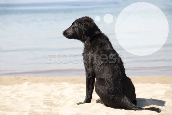 Dog At Sandy Beach, Speech Balloon With Copy Space Stock photo © Nelosa