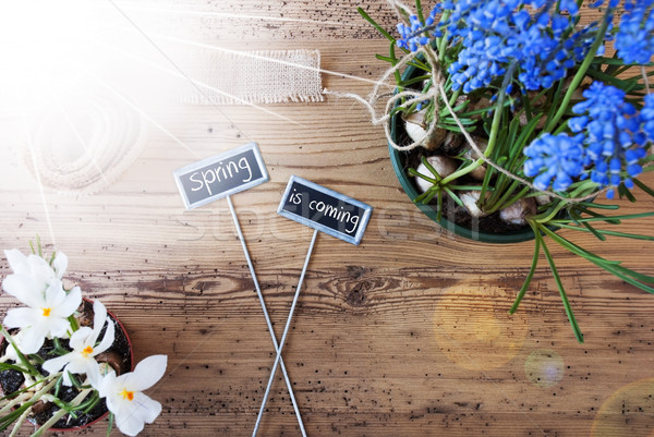 Sunny Flowers, Signs, Text Spring Is Coming Stock photo © Nelosa