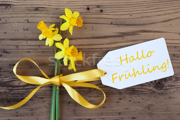 Yellow Narcissus, Label, Hallo Fruehling Means Hello Spring Stock photo © Nelosa