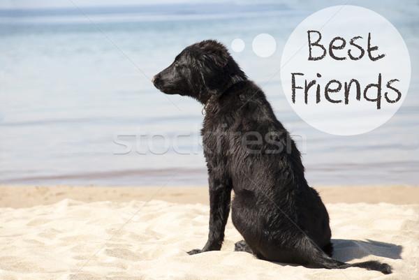 Kutya homokos tengerpart szöveg legjobb barátok szöveglufi angol Stock fotó © Nelosa