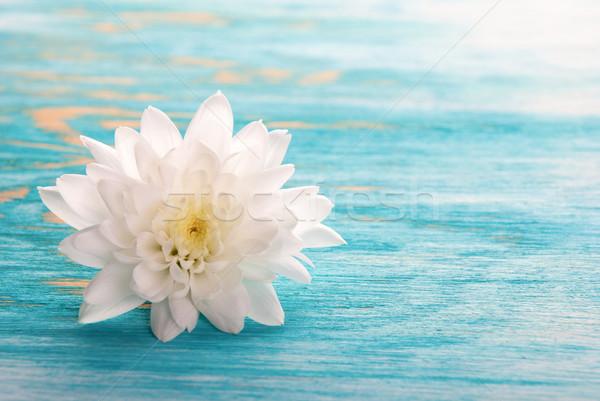 Foto d'archivio: Fiore · bianco · legno · copia · spazio · primavera · sfondo