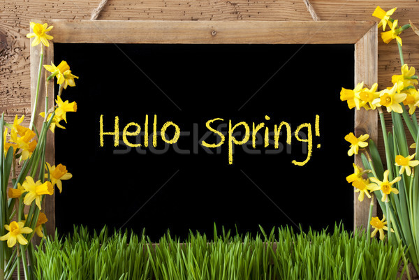 Flower Narcissus, Chalkboard, Text Hello Spring Stock photo © Nelosa