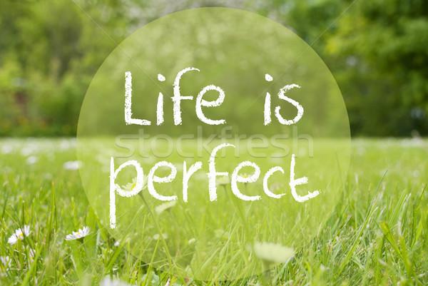 луговой Daisy цветы цитировать жизни идеальный Сток-фото © Nelosa