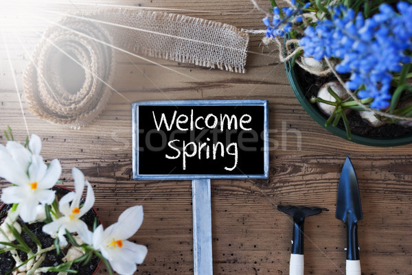 Sunny Flowers, Sign, Text Welcome Spring Stock photo © Nelosa
