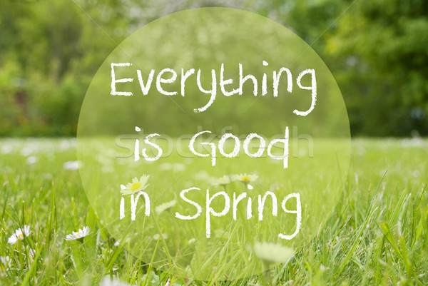 Gras Meadow, Daisy Flowers, Quote Everything Is Good In Spring Stock photo © Nelosa