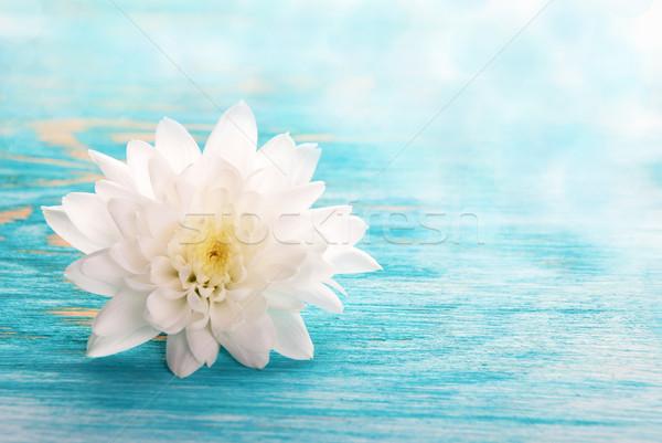White Blossom Stock photo © Nelosa