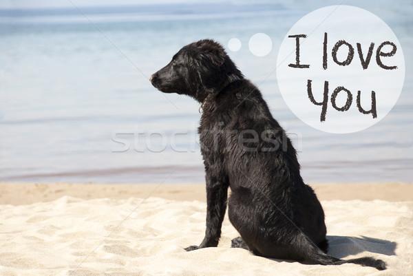 Dog At Sandy Beach, Text I Love You Stock photo © Nelosa