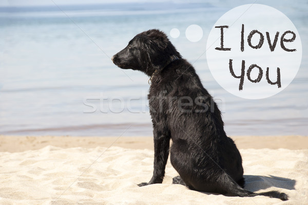 Hond zandstrand tekst liefde Engels Stockfoto © Nelosa