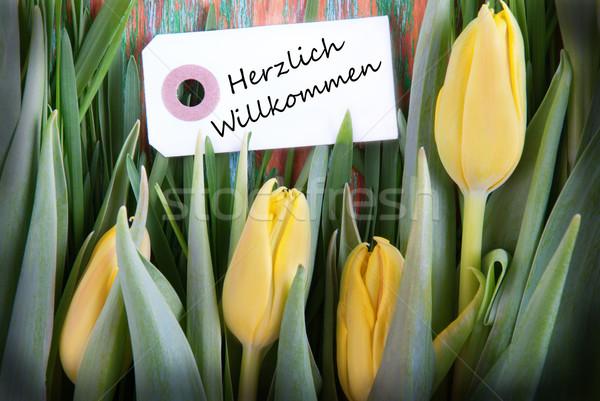 Tulip Background with Herzlich Willkommen Stock photo © Nelosa