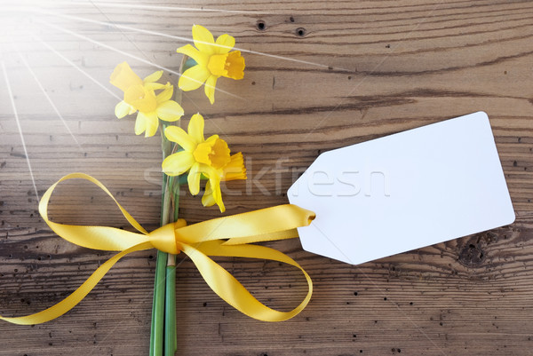 Sunny Yellow Spring Narcissus, Label, Copy Space Stock photo © Nelosa
