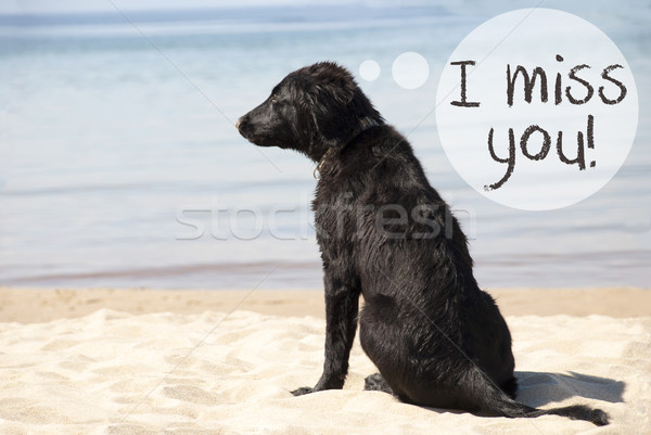 Dog At Sandy Beach, Text I Miss You Stock photo © Nelosa