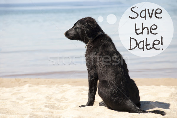 Dog At Sandy Beach, Text Save The Date Stock photo © Nelosa