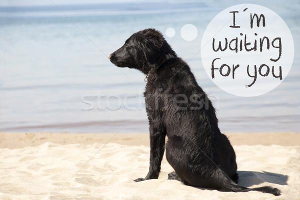 Kutya homokos tengerpart szöveg délelőtt vár szöveglufi Stock fotó © Nelosa