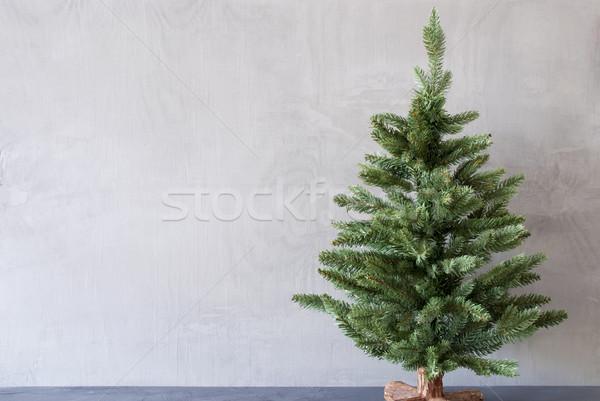 Noel ağacı bo çimento duvar mevsim Stok fotoğraf © Nelosa