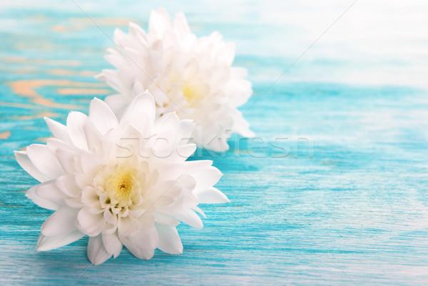 White Blossoms Stock photo © Nelosa