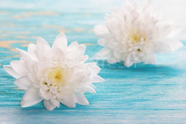 Foto d'archivio: Fiore · fiori · bianchi · copia · spazio · primavera · legno · sfondo