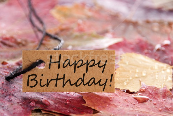 Feliz cumpleaños banner marrón hojas de otoño flores papel Foto stock © Nelosa