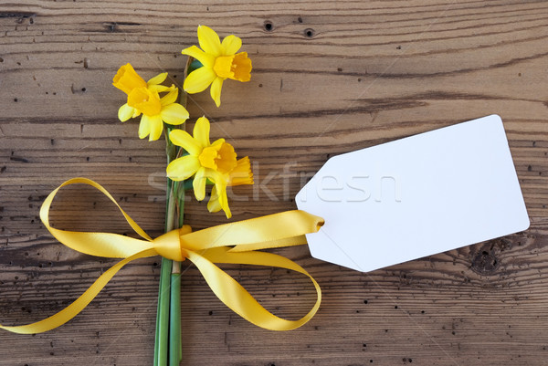 Yellow Spring Narcissus, Label, Copy Space Stock photo © Nelosa