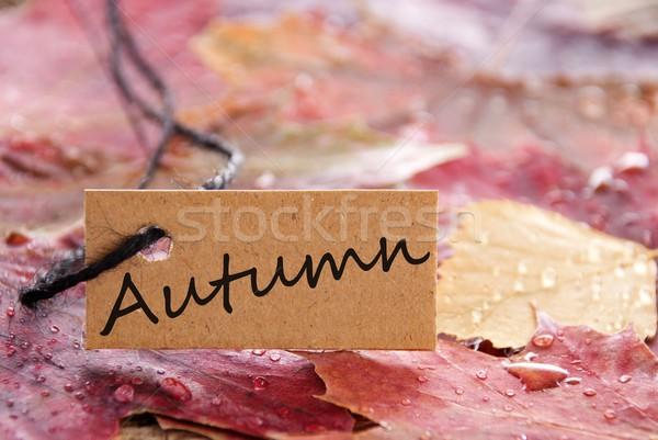Stok fotoğraf: Etiket · sonbahar · yazılı · sonbahar · yaprakları · doğa · yaprak