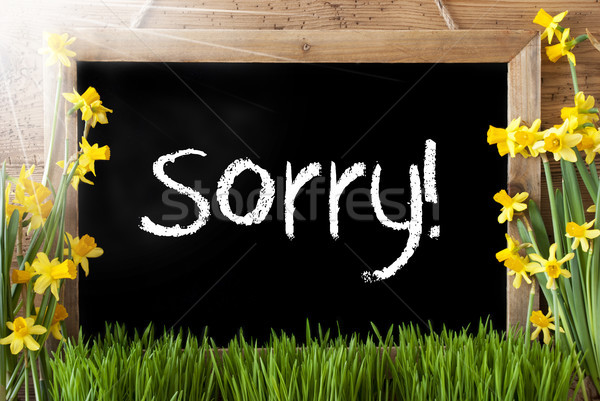 Stock photo: Sunny Spring Narcissus, Chalkboard, Text Sorry