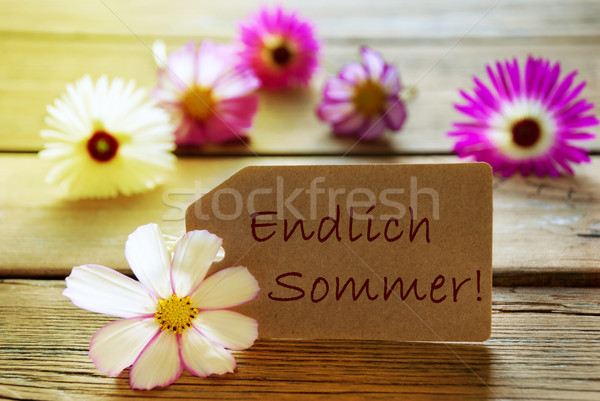 Sunny Label With German Text Endlich Sommer Means Happy Summer With Cosmea Blossoms Stock photo © Nelosa