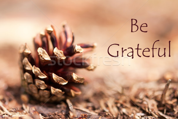 Fir Cone with Be Grateful Stock photo © Nelosa