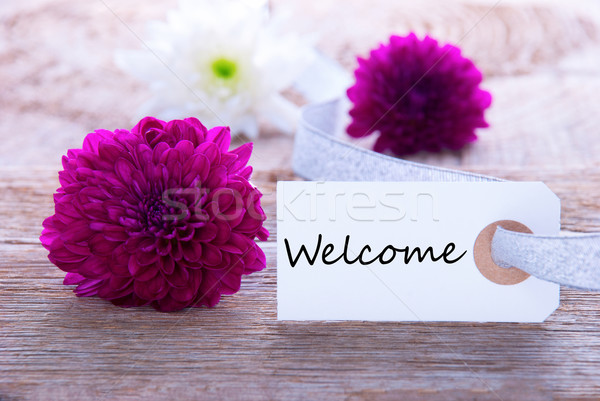 Label with Welcome Stock photo © Nelosa
