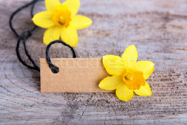 Empty Tag with Narcissus Stock photo © Nelosa
