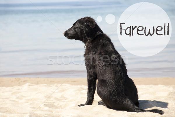 Kutya homokos tengerpart szöveg búcsú szöveglufi angol Stock fotó © Nelosa