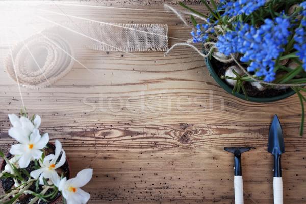 Słoneczny wiosennych kwiatów kopia przestrzeń reklama wolna tekst Zdjęcia stock © Nelosa