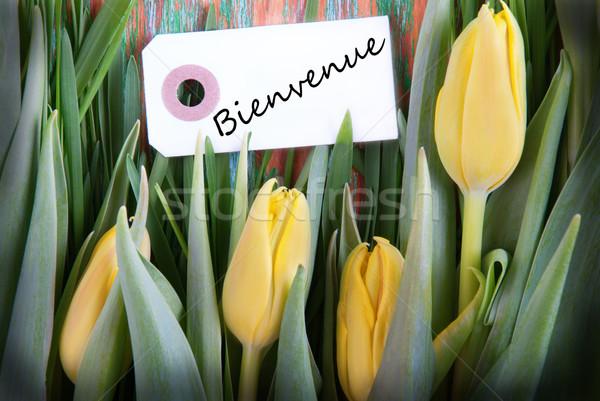 Tulip Background with Bienvenue Stock photo © Nelosa