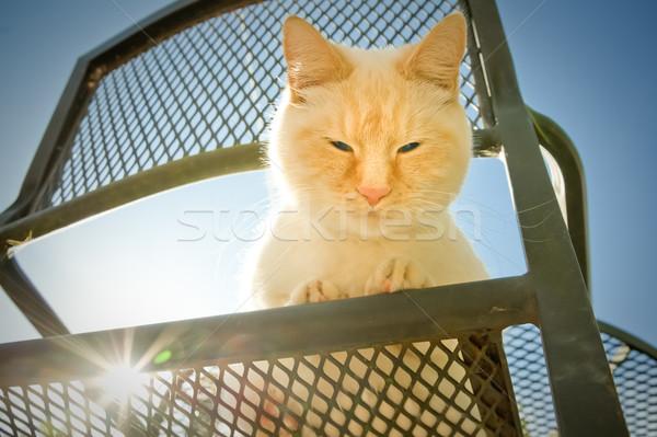 Extérieur chat bleu grand Photo stock © nelsonart