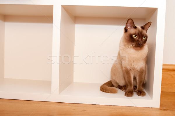 Macska doboz gyönyörű távolkeleti ül bent Stock fotó © nelsonart