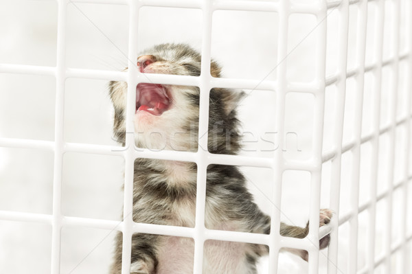 crying kitten Stock photo © nelsonart